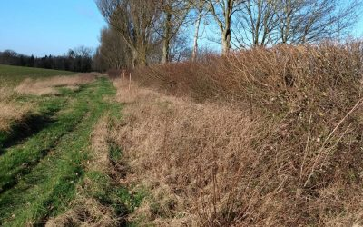 Hedges for wildlife
