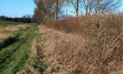 Hedges for wildlife