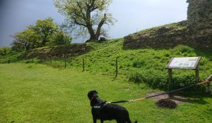 Dog on lead at Caistor Roman Town
